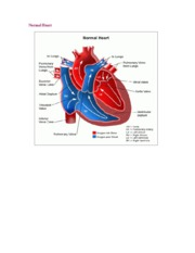 Pediatric_CardiacImages