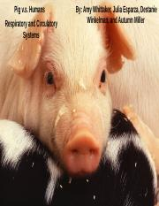 Pigs v.s. Humans Respitory & Circulatory Systems .pptx