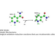 CHEM 3310 9 October 15 Nicotinamide cofactor redox enzymes(1)