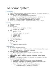 The Muscular System Notes.docx
