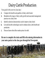 Dairy Cattle Powerpoint