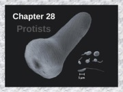 Chapter 28 protists (1)