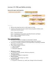 Lecture 19 (PNS and Reflex Activity - Ch. 13).docx