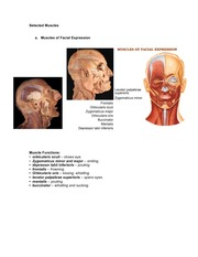Lecture 10-Selected_Muscles_facial_worksheet_IL