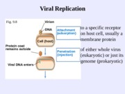 Viral Replication-1