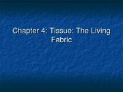 Chapter 4 Tissues The Fabric of Life