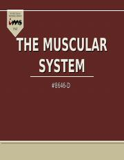 The_Muscular_System (1)