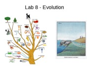 DeNegre Lab 8_evolution