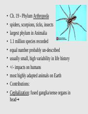 Chapter 19 - Arthropods.ppt