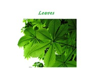 Lecture 8 - Leaves