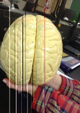 Key to Non Colored Giant Brain Model