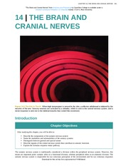 Chapter 14 - The Brain and Cranial Nerves