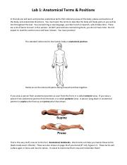 AnatomicalTermsWorksheet Answers - Anatomical Terms ...