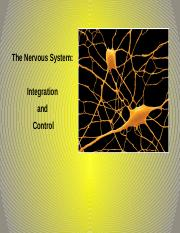 Chapter 11 The Nervous System