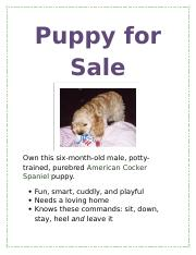 Lab 1-1 Puppy for Sale flyer - Puppy for Sale Own this six-month ...