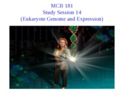 Session 14 (Eukaryote Genome and Expression)