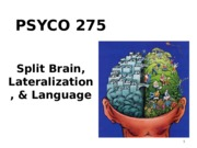 Ch 11 - Lateralization, Language,  Split Brain.ppt
