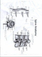 EXSS 147 Spine Anatomy chart with annotations (need to know for final!)