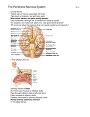 human anatomy (peripheral nervous system) notes