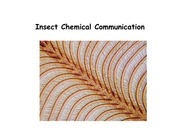Lecture 4 - Insect Chemical Communication