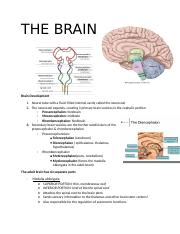 THE BRAIN part 1.docx