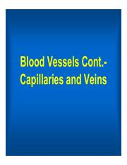 3:8 capillaries veins (1 per page color).pdf