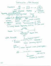 RNA Synthesis and Processing.pdf
