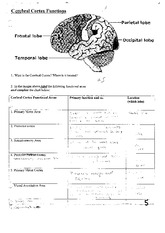 Cerebral Cortex Functions Worksheet