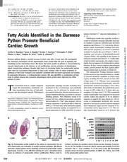 20. Fatty acids from Python promote heart growth - Copy