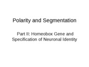 BIOL 426_ 4 - Polarity and Segmentation (Current Research)