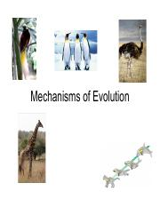 106 - mechanisms of evo (print out).pdf