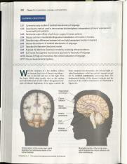 R1 - Split brain studies - textbook.pdf