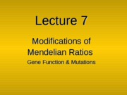 Lecture_7_-_Gene_Functions_and_Gene_Mutations