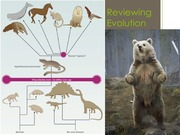 2 Overview of Evolution