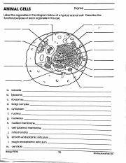 Cell_Worksheets.pdf