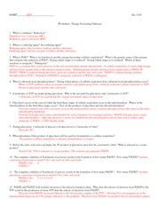 311C Respiration_worksheet+A