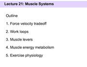 Slides 21 - Muscle systems(1)