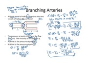 28. Branching Arteries Annotated