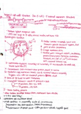 Intro to Physiology Class Notes  2