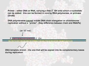 Lecture 6 DNA Replication II