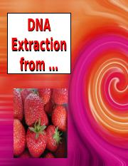 Genetics-strawberry DNA Extraction.ppt