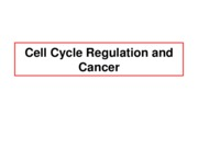 Lect18-CellCycle_CancerI