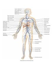 overview-principal-veins-of-the-human-body-565d5f3fecb44.jpg