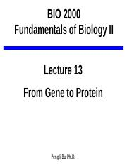 Lecture_13_A_From Gene to Protein(2)