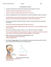Spine Muscles and Joints Worksheet