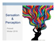 4_SensationPerception2016