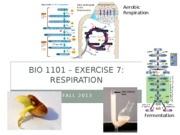 BIO1101_Exercise7_Respiration