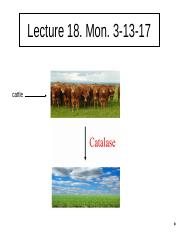 Lecture 18(1).ppt