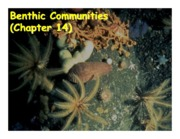 Chapter 14 Benthic communities