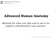 Anat 3300 Autumn 2015 Bones of the Axial Skeleton To Post